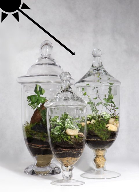 ecosystems for your home and office. moltazdesign
