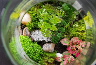 ecosystems for your home and office. Handmade with plants, soil, rocks, sand and other stuff.